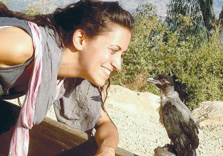 ORIT BARUCH, founder of Ohev Orev, looks at Oscar, the first crow she rehabilitated.