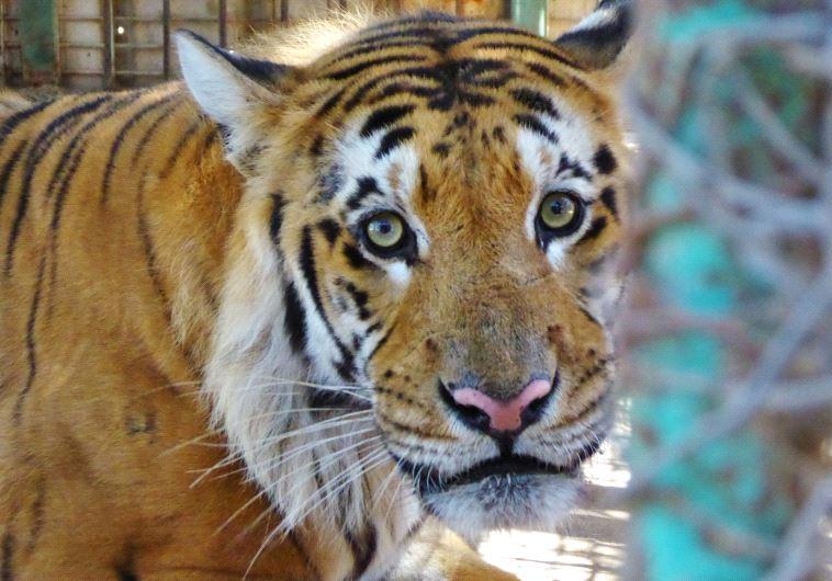 world's worst zoo