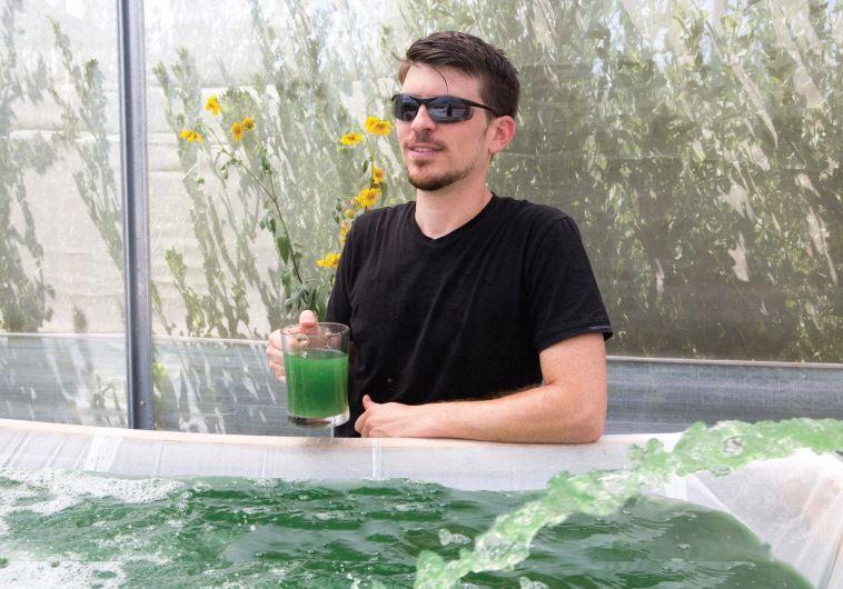 Greenspirulina