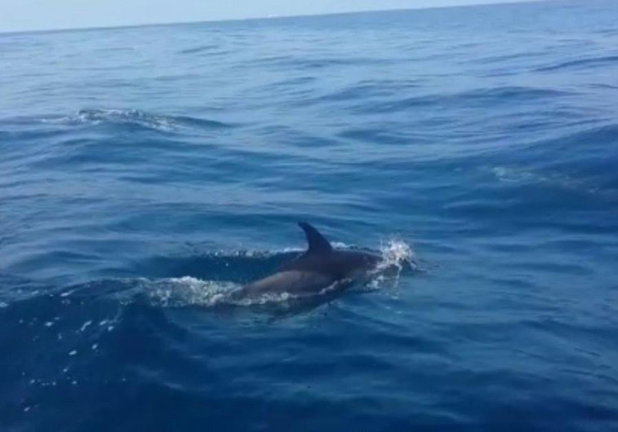 Dolphins Israel