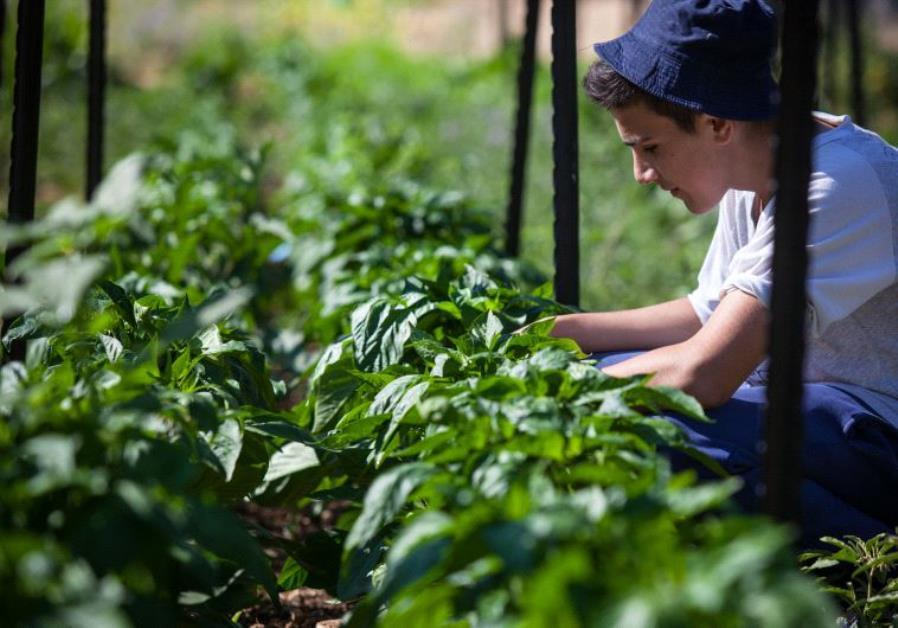 Un adolescent à la ferme Kaïma
