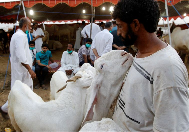 eid al adha goat