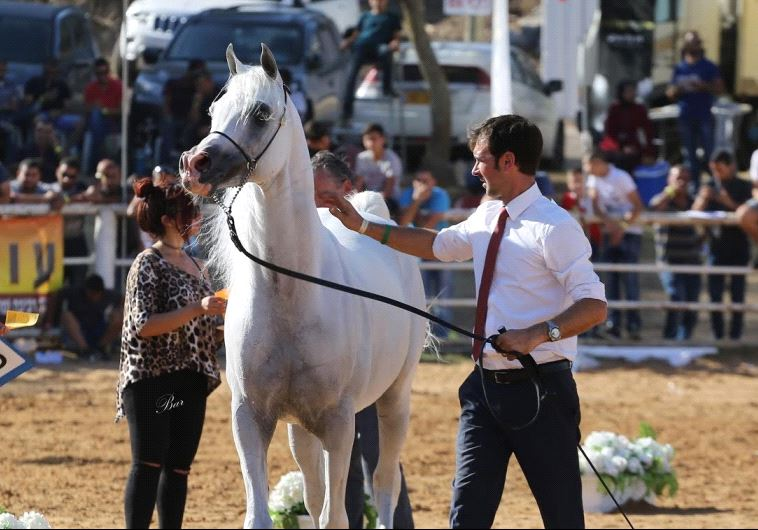 Israeli National Arabian Horse Show at Kibbutz Alonim in northern Israel