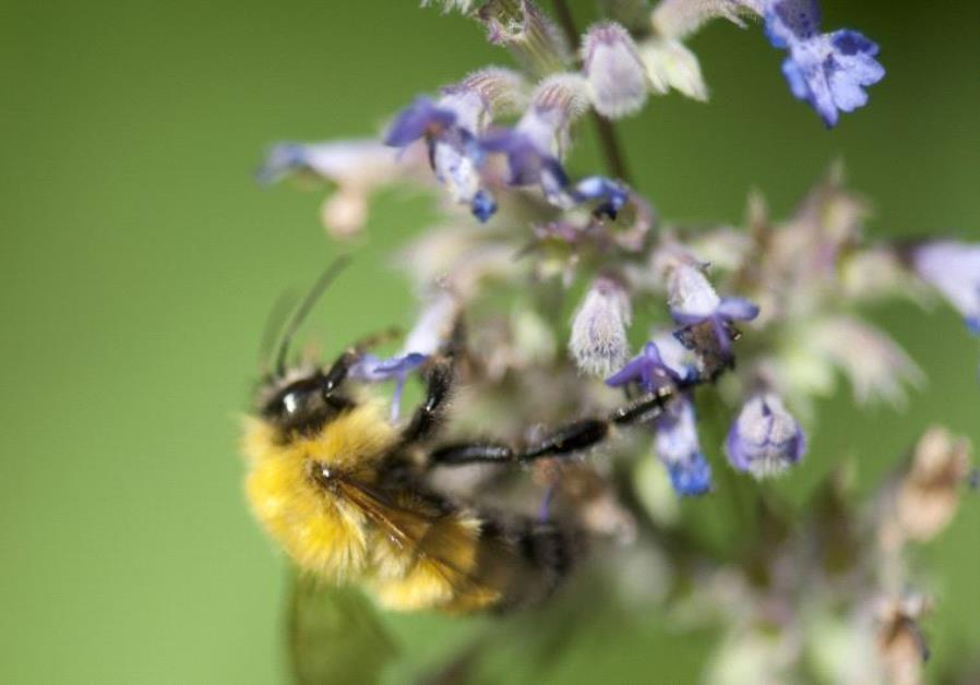 How Israel is saving the honeybees