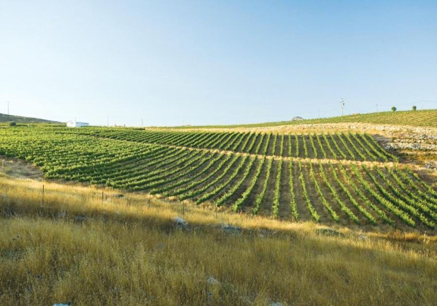Tura Winery