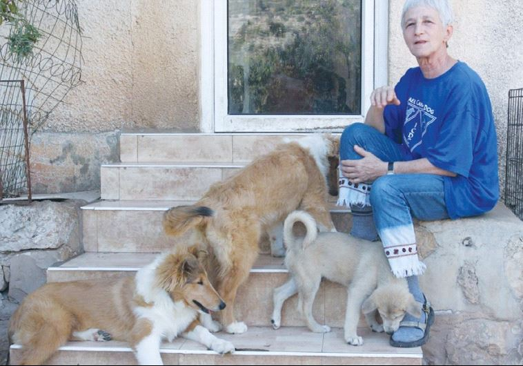 MYRNA SHIBOLETH sits with her dogs at the kennels in Sha'ar Hagai.