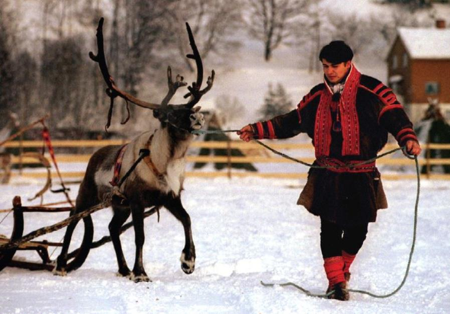 A MEMBER of the indigenous Sami people, from the northernmost region of Norway, leads a reindeer.