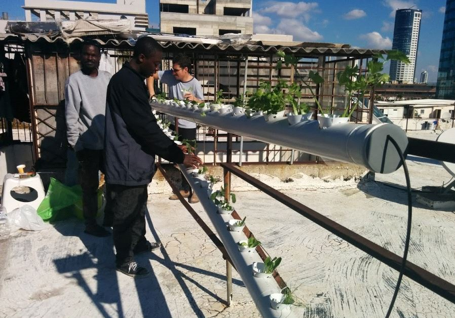 Hydroponic farm for refugees, foreign workers launches on Tel Aviv rooftop