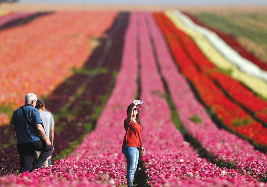 WOMAN takes a selfie in a buttercup field near Kibbutz Nir Yitzhak, outside the Gaza Strip, last Apr