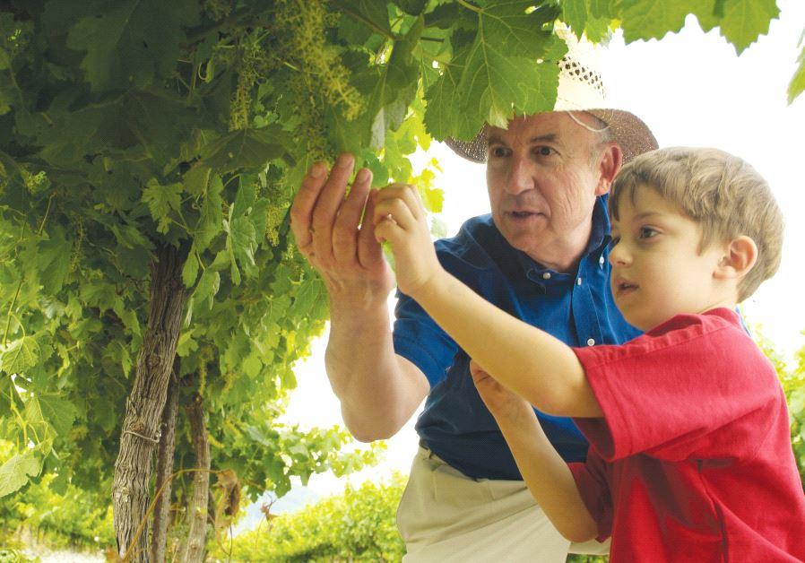 Arza and Hayotzer wineries