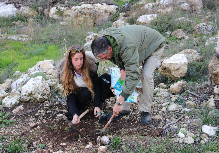 planting trees Israel