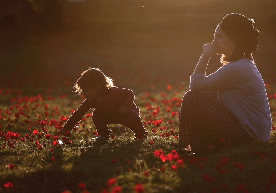 A WOMAN PLAYS with her daughter in an anemones field near Kibbutz Alumim near the Gaza Strip earlier