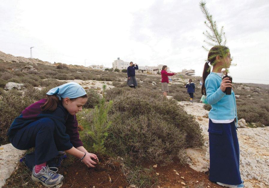 A GIRL plants a seedling outside the West Bank settlement of Kiryat Arba ahead of Tu Bishvat.
