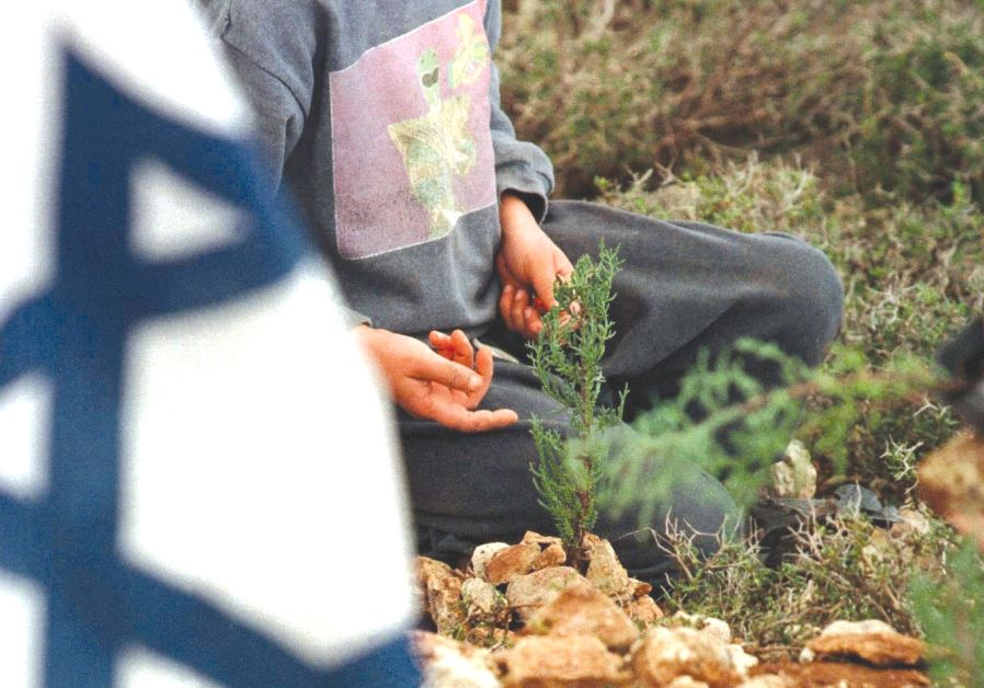 A BOY looks at a newly planted tree that, like Israel has grown, will thrive and put down roots in t