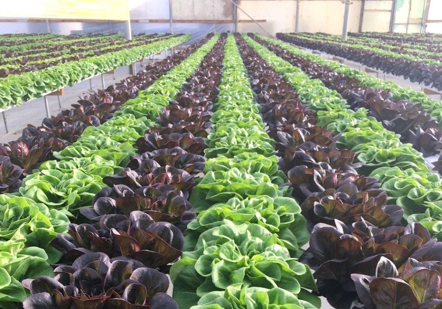 Israeli agriculture