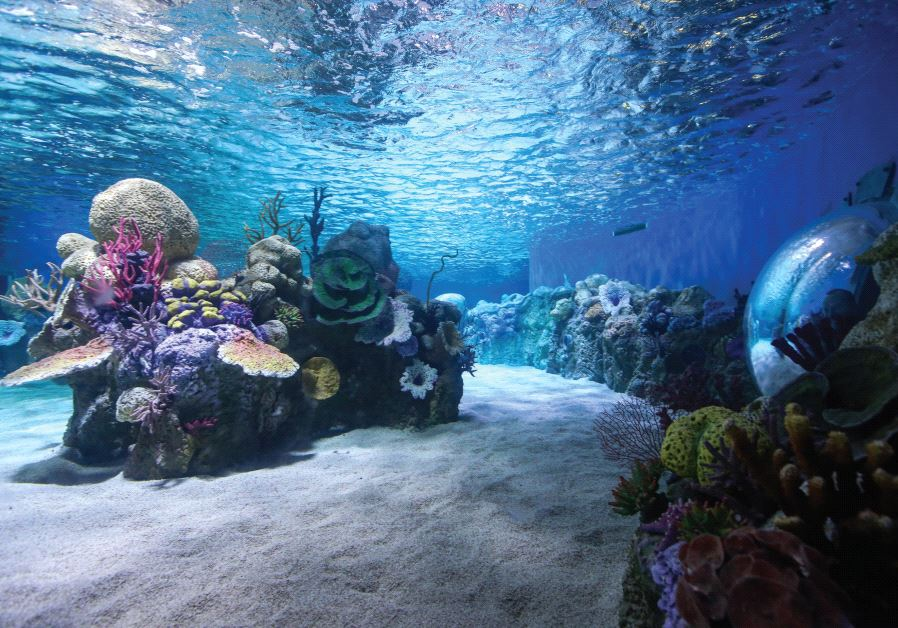 Sea Israel: The Gottesman Aquarium