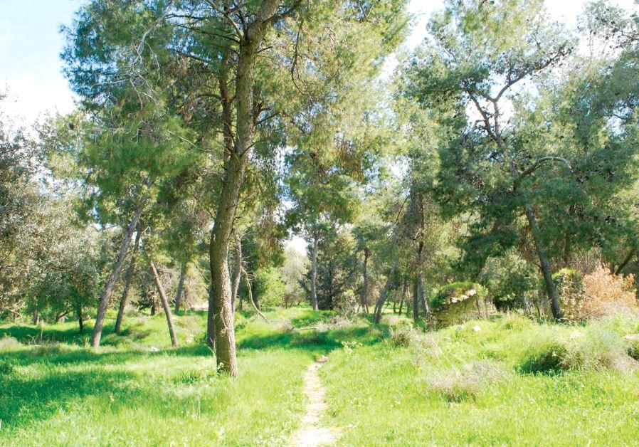 Kula Forest