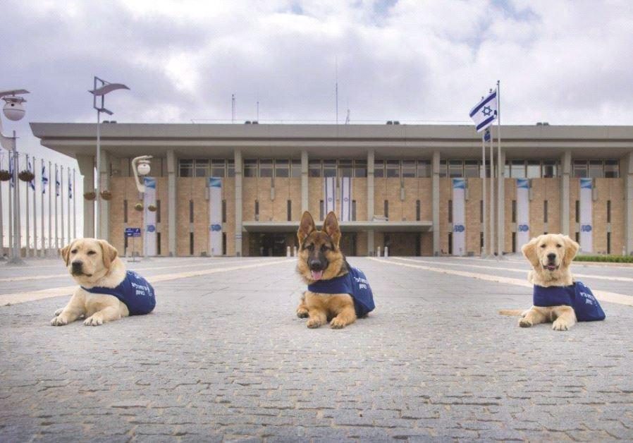 Des chiens guides d'aveugles en entrainement