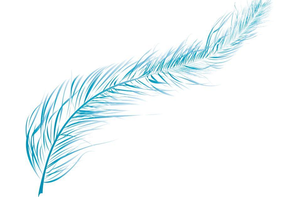 Feather Fascination In Jerusalem Jerusalem Post