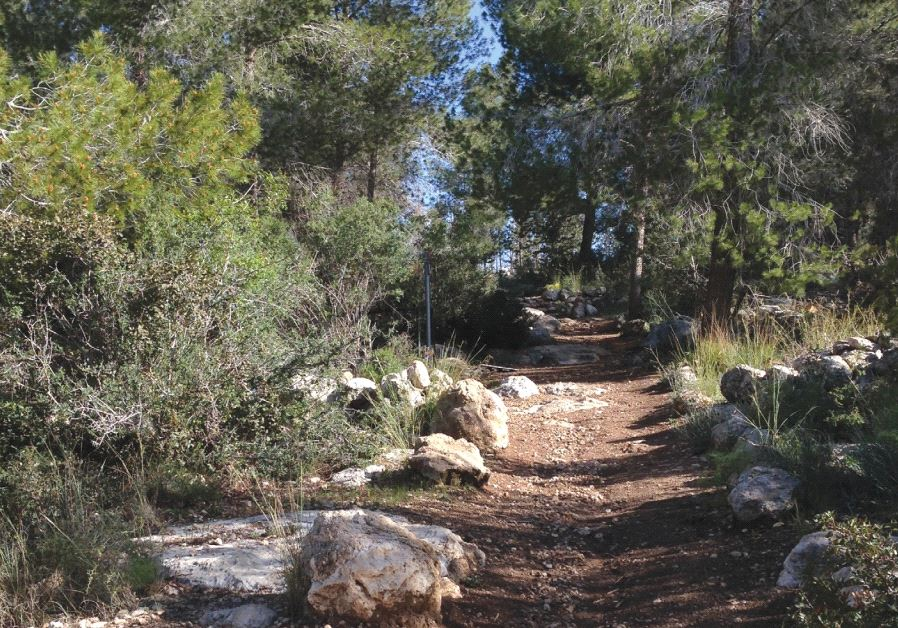 A QUIET forest section of the INT in the Jerusalem foothills between Srigim/Li'on and Tel Azeka, nea