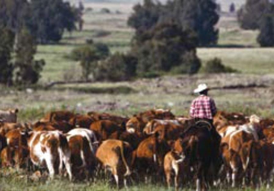 PA Ban on Israeli Livestock Brings Threats of Countermeasures