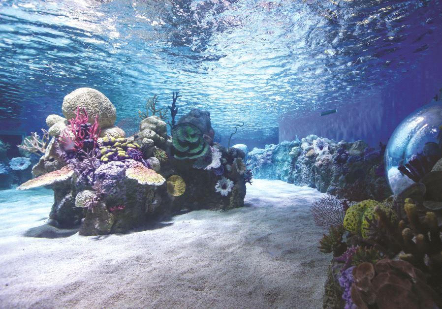 Un des futurs bassins de l'aquarium de Jérusalem