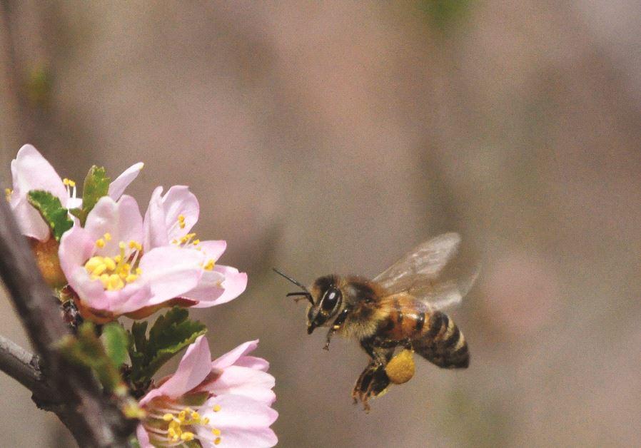 Une abeille collectant du nectar