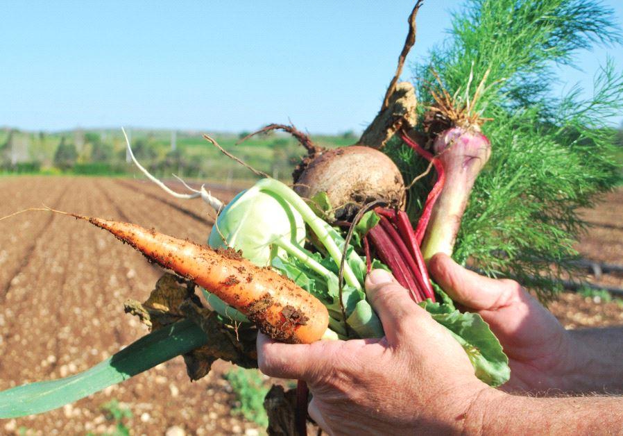 Harduf Organic Farm