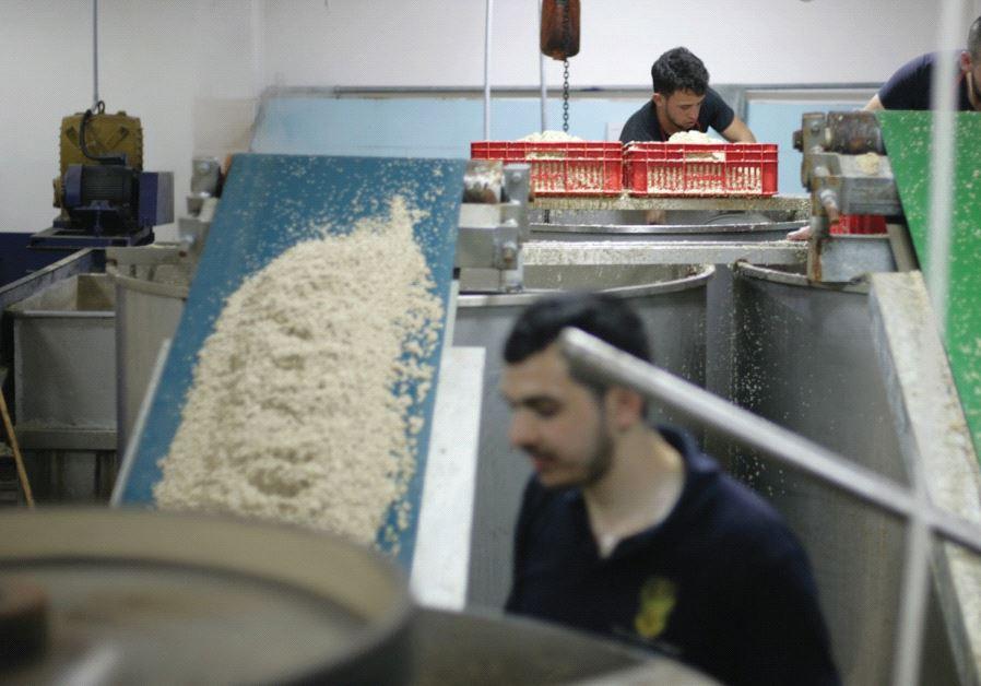 Karawan Hawara factory near Nablus Tahini
