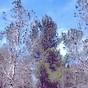 trees-88