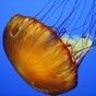 Unwelcome jellyfish arriving early this season